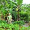 nitrogen fixers & mulch