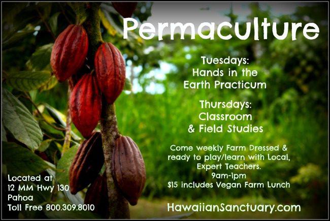 Hawaiian Sanctuary - Hand In The Earth