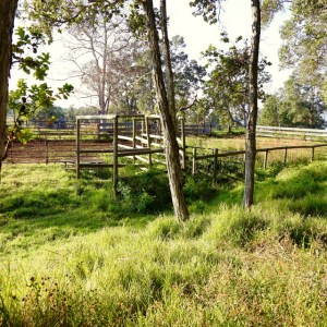 Corral in wooded pasture