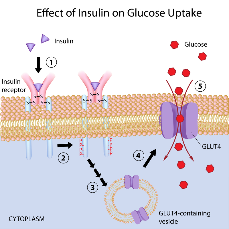 8 Lifestyle Changes for Insulin Resistance | HNR