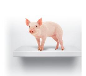 OINK! Congressional Pig Book highlights Hawaii's pork barrel spending