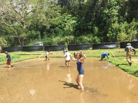 Cambria Miles and other Spring Break ag interns work in Don Heacock's KOA Farms lo`i while learning about integrated aquaculture systems