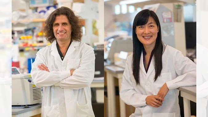 UH research on cancer-related gene nets $2.6M grant