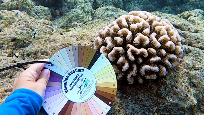 Citizens can help researchers monitor coral health with new color card