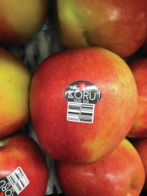 Let's Talk Food: Another new breed of apple