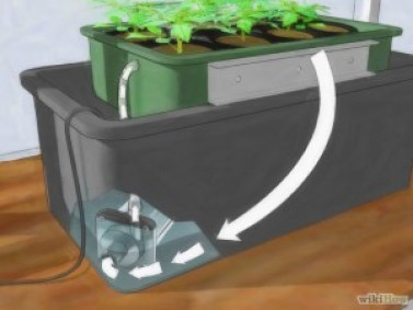 hydroponic tomato system