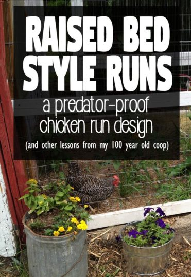A raised bed style chicken run creates exceptional drainage and is easy to predator proof