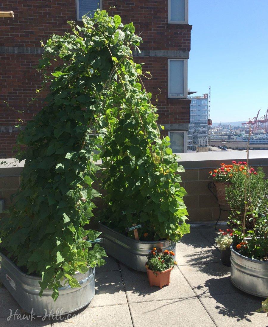 A Collection of Whimsical Garden Ideas - Hawk Hill on Whimsical Backyard Ideas id=68365