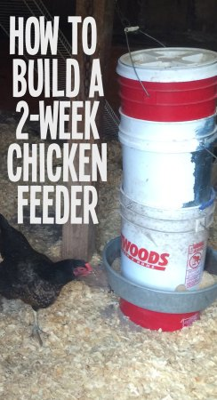 use 5 gallon buckets to build a chicken feeder that can hold a full 50lbs of feed