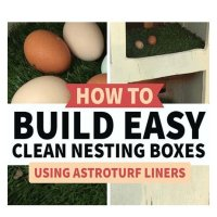 Chicken Coop Upgrade: Astroturf Lined Nesting Boxes