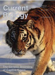 שער כתב העת CURRENT BIOLOGY ועליו ההפניה למאמר על הנמרים