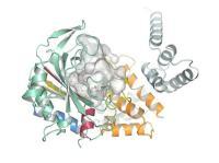 תהליך ייצור מולקולת האלנין. באדיבות החוקרים