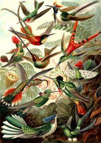 אבולוציה של עופות. ציור מאת ארנסט האקל. מתוך תערוכת דארווין שהתקיימה בפרנקפורט בין החודשים פברואר ומאי 2009