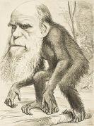 קריקטורה מהמאה ה-19 המתארת את דארווין כקוף
