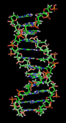 A section of DNA from Wikipedia
