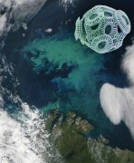 """אצה חד-תאית Emiliania Huxleyi, מסוג """"קוקוליתופור"""" (מימין למעלה, תצלום מיקרוסקופ אלקטרונים סורק באדיבות סטיב גשמייסנר), יוצרת מרבד פריחה לחופי סקנדינביה. תצלום מלוויין MODIS של נאס""""א, באדיבות ז'אק דקלואטר"""