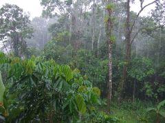 יערות גשם בטנה - אקואדור