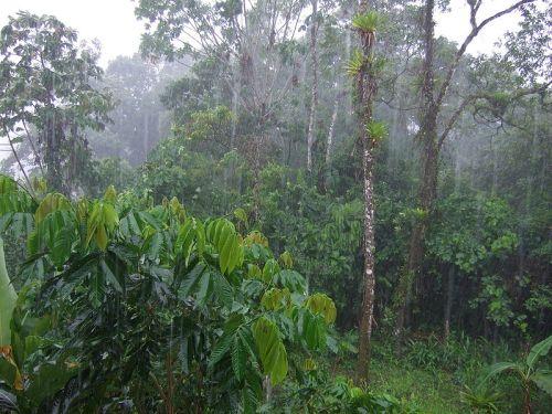 יערות גשם בטנה - אקואדור, מתוך ויקיפדיה