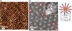 תמונה a היא תמונת מיקרוסקופ כוח אטומי (AFM) של יריעת פולימר שהנקודות הכהות בה הן ננו צינוריות אורגניות. b היא תמונת מיקרוסקופ העברה אלקטרוני (TEM) של יריעה עם תעלות תת-ננומטריות שבה הננו- צינוריות האורגניות מוקפות בעיגול אדום. מימין – הגדלה של ננו צינורית בודדת. תמונה: Ting Xu
