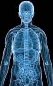 הפצת תרופות בגוף באמצעות ננו חלקיקים. הדמיה: אוניברסיטת קופנהגן