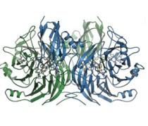 מולקולת N2O. איור: אוניברסיטת פרייבורג