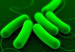 E_coli - מפרק תאית והופך אותה לדלק. איור: משרד האנרגיה האמריקני