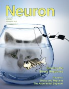 שער כתב העת Neuron מפברואר 2012, ובו מאמר של חוקרים ממכון ויצמן על תפקוד הגוף במצבי לחץ