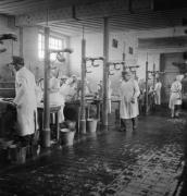 קרדיט: ויקיפדיה, מתוך אוספי מוזיאוני המלחמה הקיסריים של בריטניה מתקן לחיטוי אסירים חולים לאחר שחרור מחנה הריכוז ברגן-בלזן. לכל אחד מ-60 השולחנות צוותו שני רופאים גרמנים ושתי אחיות שרחצו וחיטאו את החולים.