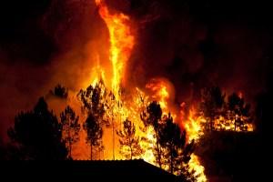 שריפת יער. צילום: shutterstock