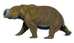 דיפּרוֹטוֹדוֹן, מין ווֹמבּט ענקי. איור: Dmitry Bogdanov/Wikimedia Commons