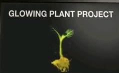 לוגו פרויקט Glowing plants