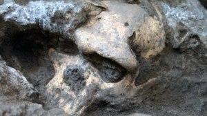 סיווג חדש של מיני האדם הקדמון. גולגולת מס. 5 בעת גילויה. תצלום באדיבות המוזיאון הלאומי של גיאורגיה