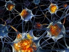 נוירונים בתלת ממד. איור: shutterstock