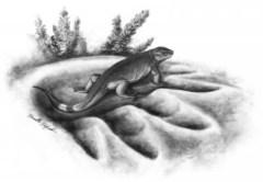 שיחזור של טורף זעיר בן 300 מיליון שנה המכונה Eocasea, בתוך טביעת רגל של אוכל העשב הגדול ביותר בתקופה של לפני 270 מיליון שנה, ה- Cotylorhynchus. איור: דניאל דופו