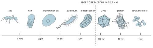 איור 1 – הגבול של אבה (0.2 מיקרונים): ניתן לראות נמלה, שערה, תא של יונק, חיידק ומיטוכונדריה; לא ניתן לראות נגיף, חלבון ומולקולות קטנות.