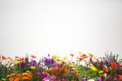 גן פרחים. צילום: shutterstock