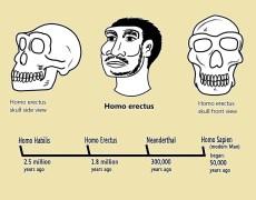 הומו ארקטוס, ולוח הזמנים של התפתחות האדם. איור: shutterstock
