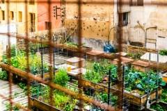 גן ירק בסביבה עירונית. צילום: shutterstock
