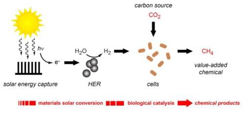 מערכת פוטוסינתיזה מלאכותית לייצור מימן מולקולארי ממקור מתחדש. המימן עצמו משמש לסינתזת גז מתאן מתוך פחמן דו-חמצני בעזרת חיידקים. [באדיבות: מעבדת ברקלי]