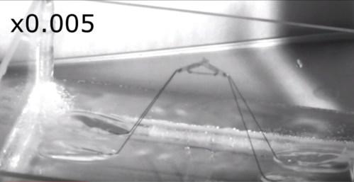 רובוט קופץ על המים. צילום: האוניברסיטה הלאומית של סיאול