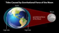 המחשת הגאות הנגרמת על ידי הירח. איור: shutterstock