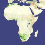 בצורת באפריקה בשנת 2006: שטחים שבהם יש צמחייה שופעת נראים בירוק, אזורים שבהם הצמחייה בריאה ומשגשגת פחות הם חומים. צילום: NASA image created by Jesse Allen, using data provided courtesy of Jennifer Small, NASA GIMMS Group at Goddard Space Flight Center