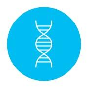 DNA מינימאלי. אילוסטרציה: shutterstock