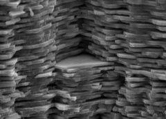 סריקה במיקרוגרף אלקטרון של ננו לבנים של החומר nacre Credit: F. Heinemann; Wikimedia Creative Commons License.