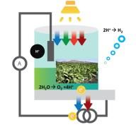 תיאור סכמטי של התא הביו-פוטו-אלקטרוכימי שפותח בטכניון.
