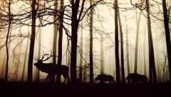 יער צפוני. מתוך PIXABAY.COM