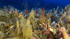 במחקר התגלו גני ספוגים מגוונים ועשירים באופן יוצא דופן לחוף הישראלי. צילום: חלק ממחקר במעבדתו של פרופ' מיכה אילן באוניברסיטת תל אביב.