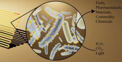 תמונת אילוסטרציה של ביו-מגוב (משמאל) המלא בחיידקים המעוטרים בננו-גבישים קולטי אור העשויים מקדמיום סולפיד (במרכז) שמטרתם להמיר אור, מים ופחמן דו-חמצני לכימיקלים שימושיים (מימין) [באדיבות: Kelsey K. Sakimoto]