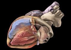 תאי גזע יוכלו לשקם רקמת צלקת או למנוע את היווצרותה לאחר התקף לב ולטפל באי ספיקת לב. איור: Patrick J. Lynch, medical illustrator; C. Carl Jaffe, MD, cardiologist.