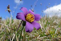 """""""כיצד קרה שהצמחים בעלי הפרחים, שהתפתחו המאוחר ביותר מבחינה אבולוציונית מהווים 90% מכלל מיני הצמחים היבשתיים שאנו מכירים היום?"""" צילום: Bernard DUPONT."""